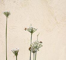 Three Bees - 31 03 13 by Robert Phillips