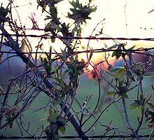 Wild Sunset by AbigailJoy