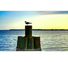 Perched Seagul Photographic Print
