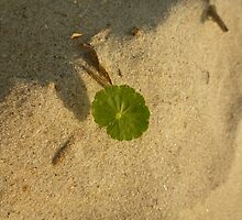 Sea Oat in Sand by Chad Burrall