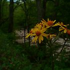 Elk River Flowers by Chad Burrall
