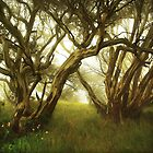 Snowgums in mist by Kevin McGennan