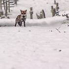 Fox in Snowy Graveyard by nicktopus