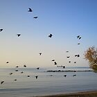 Bird in the Sky at the beach by fitithis