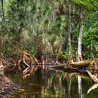 Loxahatchee River 4 by Michaela Kopecka