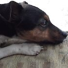 Jack Russell by SnapThat