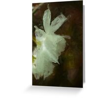White Daffodils Floral Impressionist Painting Poster Greeting Card
