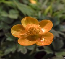 Buttercup by Stevie B