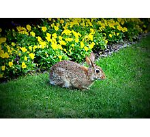Silly Rabbit Photographic Print