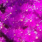 purple garden flowers by Erik Lopez