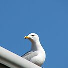 Lord of All He Surveys - Seagull on Roof by BlueMoonRose