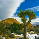 Joshua Tree in Snow by photosbyflood