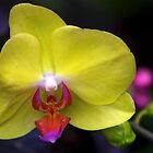 The Beauty of Orchids by Jeannie  Mazur