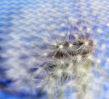 Embossed Dandelion by aprilann