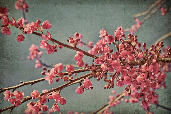 Spring blossom. by Lyn Darlington