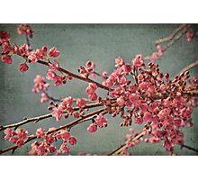 Spring blossom. Photographic Print
