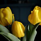 Tulip Trio by goddarb