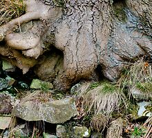 Treebeard, Goyt Valley by Mikhail31
