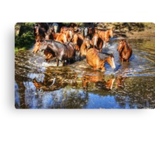 Follow the leader ... which way? Canvas Print