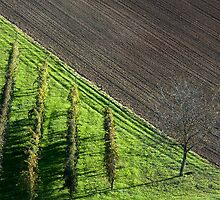 vineyards in earth of romagna by Luciano Fortini