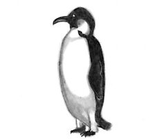Black and White Penguin by 2dollarsidekick