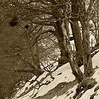 Bad Trees, Goyt Valley by Mikhail31