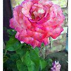 Rose by Glenn McCarthy