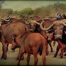 A BUFFALO GATHERING - The Buffalo - Syncerus caffer - BUFFEL by Magaret Meintjes