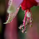 Fuchsia droplets by Celeste Mookherjee