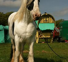 Gypsy Pony by CharlotteMorse