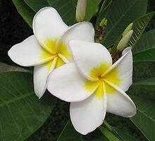 Plumeria Blossom by kirilart