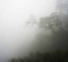 Colombia - Tropical rain forest in the mist by Christian Werthenbach