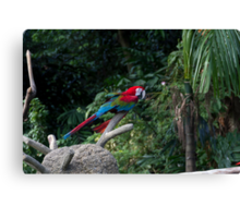 A red, green and blue Macaw on a branch Canvas Print