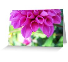 Dahlia Pastel Greeting Card