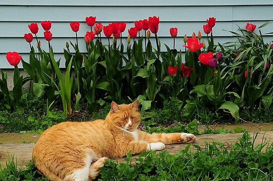 CAT NAPPING~ by RoseMarie747