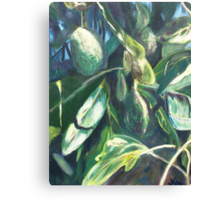 Avocado Lights (acrylic) Canvas Print