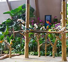 Colorful macaws and other small birds on trees at an exhibit by ashishagarwal74