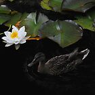Water Lilys and duck by Karl  Zielke
