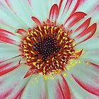 Flower Close-up by relayer51