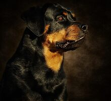 The Rotty by Lover1969
