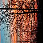 Sunrise Winter Trees by Warren Paul Harris