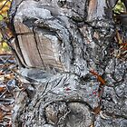 Face in the Wood by heatherfriedman