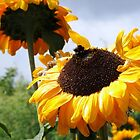 The Sunflower and the Bee by photogart