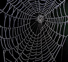 Webs in a Dewy Dawn by LisaBuchfink