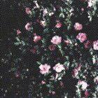 Pixel Roses by annabelrw