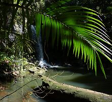 The beauty of the rainforest by PhotosByG