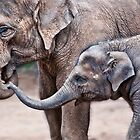 Mali and Mum by Robyn Meyer