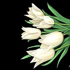 White Tulips on Black by Zdenek Sasek