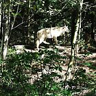 Woodland Park Zoo by Sarah Slapper