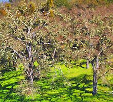 Oak Grove - Carmel Valley by JimPavelle